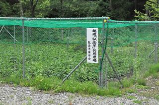 弘法芋2014.6.18_k_1.jpg