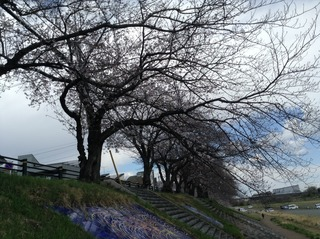 花見2019.4.1-2.jpg