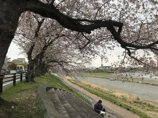 花見2019.4.12-1.jpg